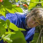 Cornish smock gardening